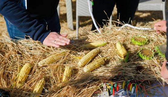 Мероприятие для крупного сельскохозяйственного бренда в Балаково